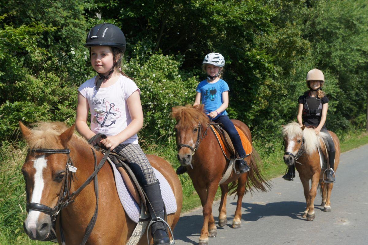 937b1a64f281c5 Ihre Kinder lernen viel rund ums Pony und haben auch die ersten  Reiterlebnisse. Selbst wenn Ihr Kind dann den Pferdesport nicht oder noch  nicht für sich ...